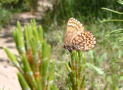 Photo of butterfly along the trail