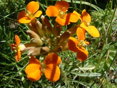 Photo of orange flower