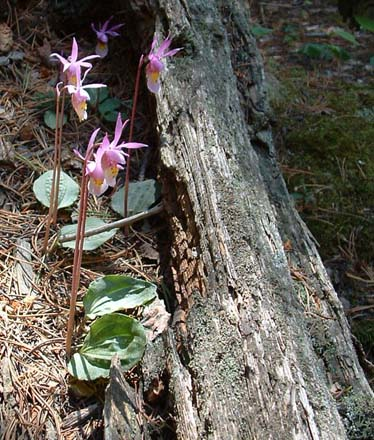 Photo of orchids growing in fallen log