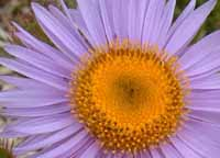 photo of purple flower