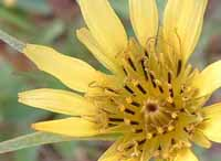 photo of yellow flower