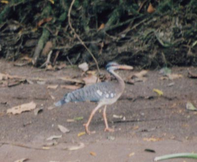 photo of bird on river bank