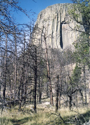 Photo of Devils Tower through burned trees
