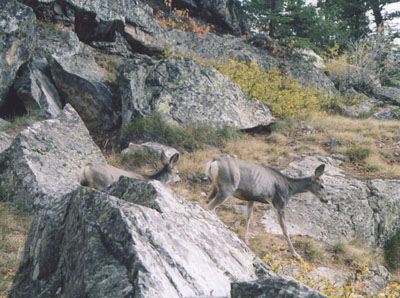 Photo on Inspiration Point Trail. By John Hunter, Grand Teton National Park, 28 September 2002