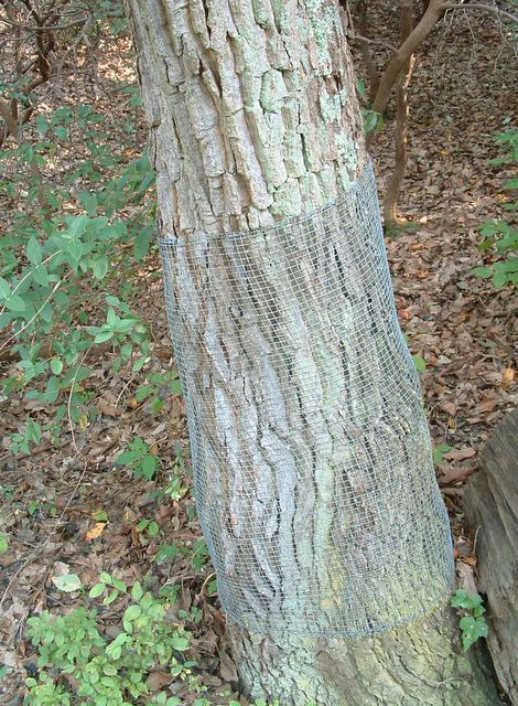 photo of tree wrapped in wire mesh, Mason Neck State Park, Virginia
