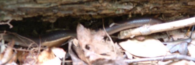 Blurry photo of a snake