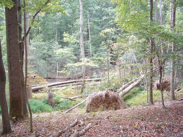 photo of fallen trees in Mason Neck State Park trail