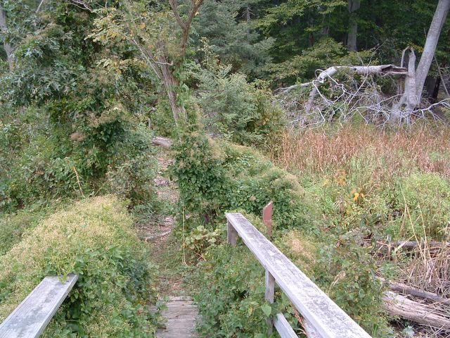 photo of overgrown trail