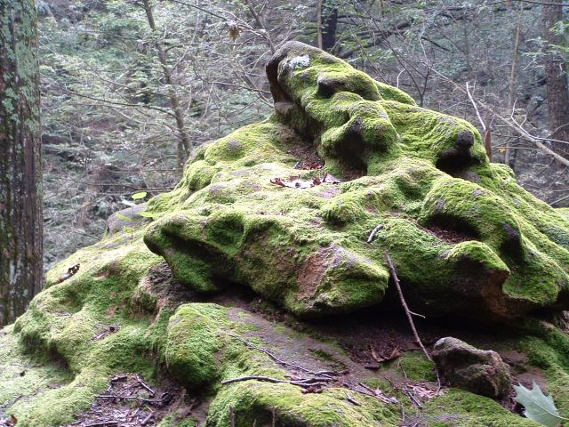 photo of mossy rock on the Appalachian Trail, Pennsylvania