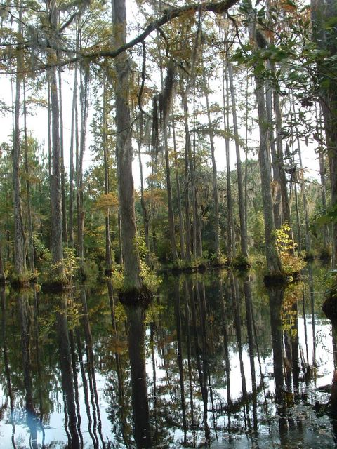 photo of Cypress Swamp