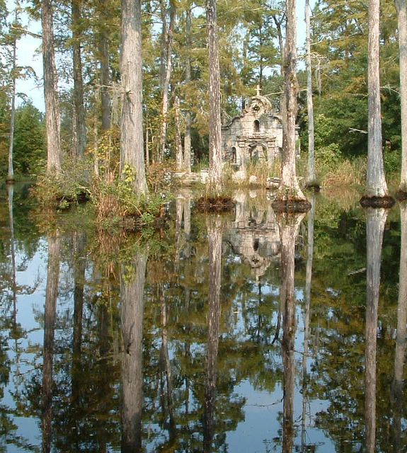 photo of cypress trees
